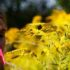 Pollen count numbers are published daily, and help allergy patients protect themselves.